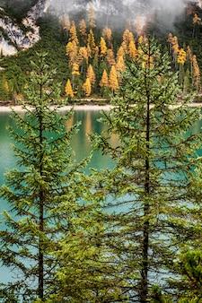 Pinheiros e verde esmeralda lago braies nas dolomitas, itália