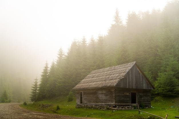 Pinheiros lindos nas montanhas