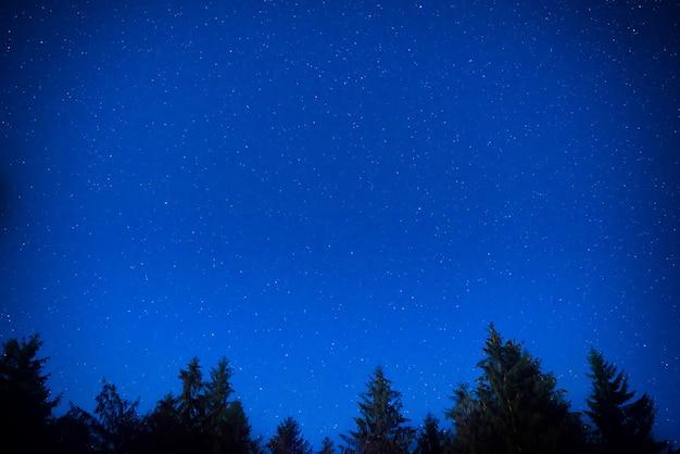 Pinheiros noturnos de azul escuro sobre o céu com muitas estrelas. fundo da via láctea