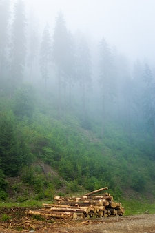 Pinheiros verdes bonitos no nevoeiro nas montanhas dos cárpatos, na ucrânia.