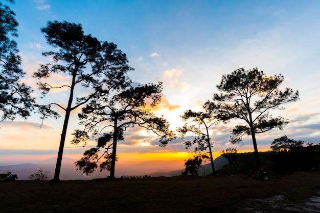 Pinho do por do sol da silhueta no parque nacional tailândia.
