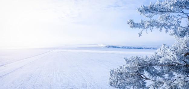 Pinho nevado contra o campo de inverno e o céu azul, paisagem de inverno, com lugar para texto