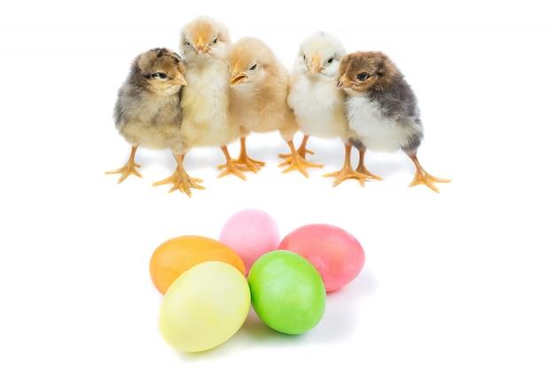 Pintinho da páscoa e ovos pintados