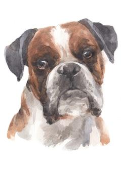 Pintura a aguarela de boxer