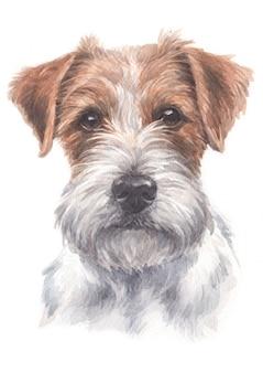 Pintura a aguarela de jack russell terrier