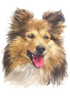 Pintura a aguarela de shetland sheepdog