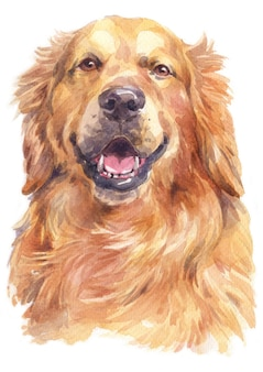 Pintura a aquarela de golden retriever