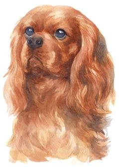 Pintura a aquarela do cavalier king charles spaniel