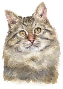 Pintura a cores de água de gato siberiano