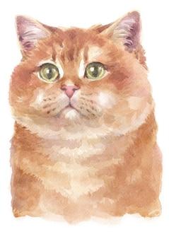 Pintura a cores de água de hosico cat