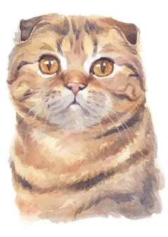 Pintura a óleo da cor do scottish shorthair cat