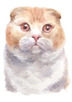 Pintura a óleo da cor do scottish shorthair cat