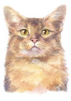 Pintura de cor de água de gato de cabelos curtos da somália