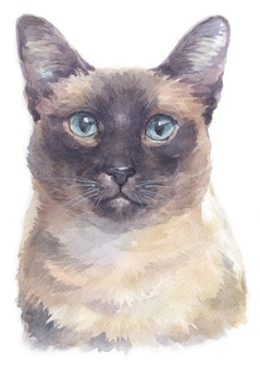 Pintura de cor de água de gato siamese shorthair