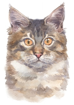 Pintura de cor de água de maine coon cat