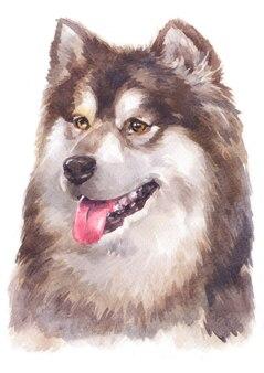 Pintura de cor de água de malamute do alasca
