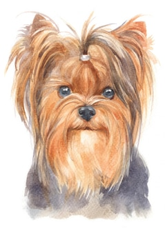 Pintura de cor de água de yorkshire terrier