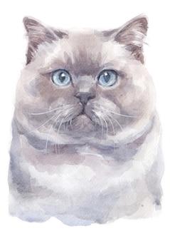 Pintura de cor de água do gato britânico shorthair