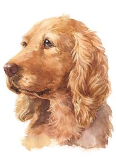 Pintura em aquarela, cor tan, raça cocker spaniel inglês
