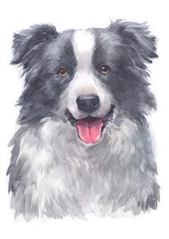 Pintura em aquarela de border collie