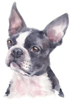 Pintura em aquarela de boston terrier