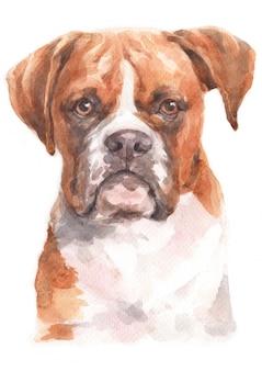 Pintura em aquarela de boxer