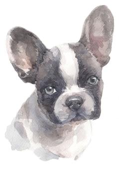 Pintura em aquarela de bulldog francês
