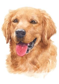 Pintura em aquarela de cães, cabelos dourados golden retriever
