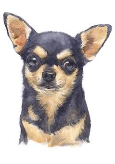 Pintura em aquarela de chihuahua