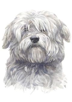 Pintura em aquarela de coton du tulear cão branco