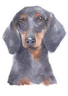 Pintura em aquarela de dachshund miniatura