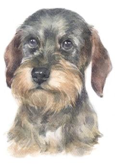 Pintura em aquarela de dachshund
