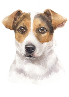 Pintura em aquarela de jack russell terrier