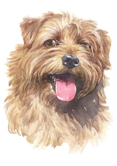 Pintura em aquarela de norfolk terrier