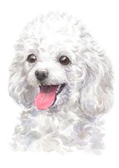 Pintura em aquarela de poodle