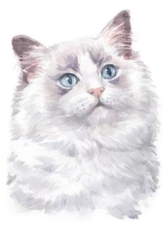 Pintura em aquarela de ragdoll