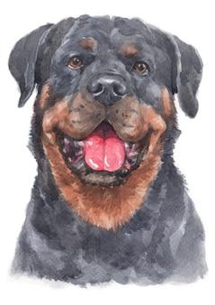 Pintura em aquarela de rottweiler