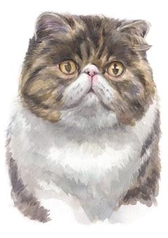 Pintura em aquarela de shorthair exótico