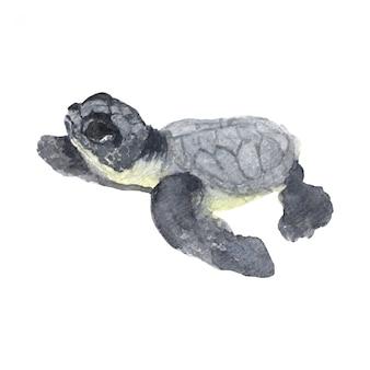Pintura em aquarela de tartarugas marinhas