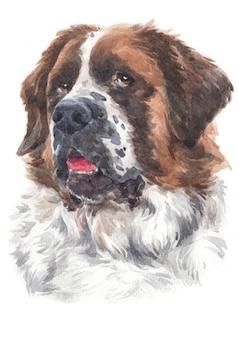 Pintura em aquarela de um grande cão de raça são bernardo