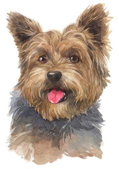 Pintura em aquarela de yorkshire terrier