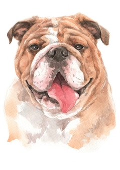 Pintura em aquarela do buldogue