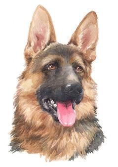 Pintura em aquarela do pastor alemão alemão