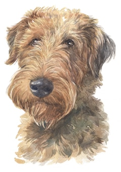 Pintura em aquarela do welsh terrier