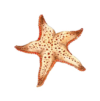 Pintura em aquarela estrela-do-mar bege animais marinhos do oceano habitantes do fundo do mar cinco raios de uma estrela