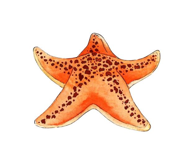 Pintura em aquarela estrela do mar laranja animais marinhos do oceano habitantes do fundo do mar