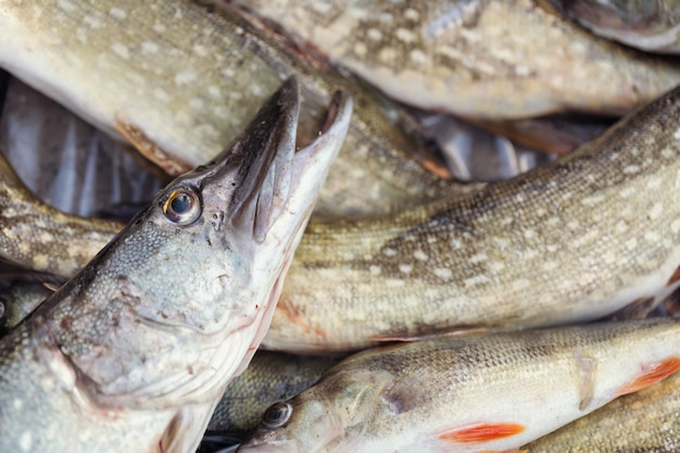 Pique peixe close-up