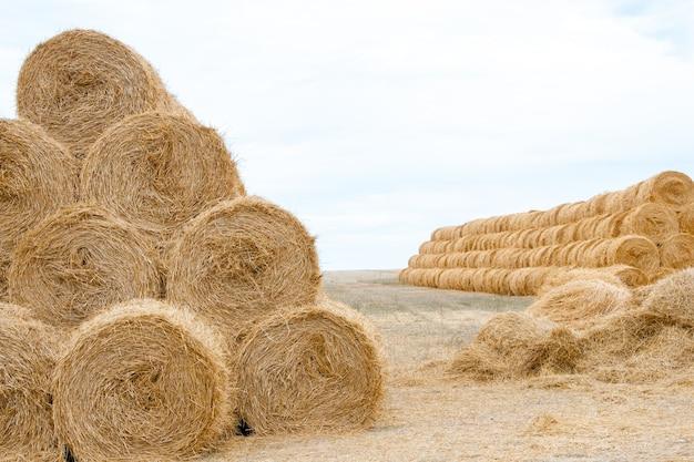 Pirâmide de pilhas fortemente torcidas de feno dourado no final do verão com conceito de agricultura local Foto Premium