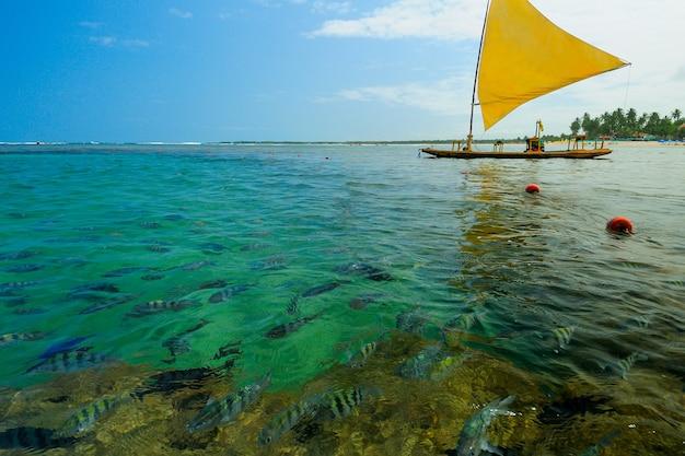 Piscinas naturais com pequenos peixes na praia de porto de galinhas próximo ao recife pernambuco brasil