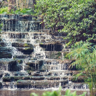 Pisou cachoeira e vegetação no jardim botânico e zoológico em hong kong